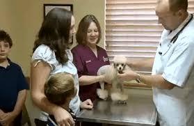 garden grove animal hospital. Plain Hospital Garden Grove Animal Hospital  Winter Haven FL To E