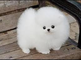 cute baby dog. Beautiful Cute About ExploreDogs Editor On Cute Baby Dog E