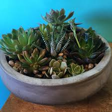 succulent garden gift