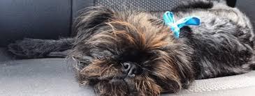 Choosing The Perfect Pawfect Pet Minder Sitter My Vet Animal