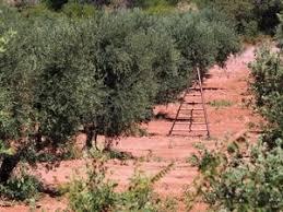 """Résultat de recherche d'images pour """"moulin à huile d'olive"""""""