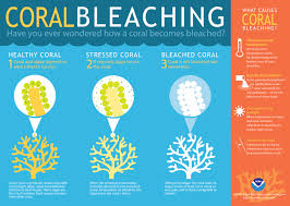 How Long Can You Survive In Cold Water Chart What Is Coral Bleaching
