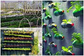 Vertical Garden Design Ideas New Researching DIY Vertical Garden Ideas That Actually Look Good