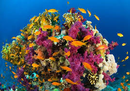colorful coral reef wallpaper. Colorful Coral Reef Wallpaper 4607 The Wondrous Pics Throughout