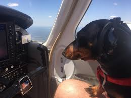 How To Protect Your Dogs Hearing While Flying