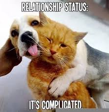 cute animals quotes.  Cute Itu0027s Complicated Quotes Cute Memes Animals Quote Pets Meme Funny  Relationship Animal And Cute Animals Quotes S