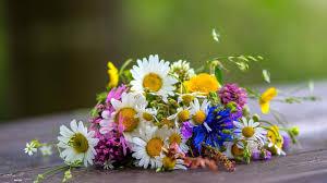 Rsultat de recherche dimages pour bouquet de fleurs sauvages photos