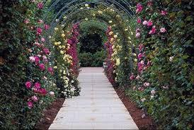 El Jardín De La Alegría  Cómo Se Podan Los Rosales Trepadores Cuidados De Los Rosales