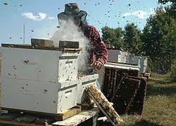 Αποτέλεσμα εικόνας για καπνιστήρι μελισσοκόμου