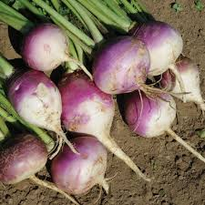Image result for image of turnips