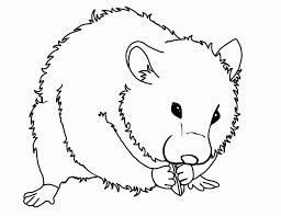 Cute Coloring Pages Of Hamsters Printable Coloring Sheet Anbu