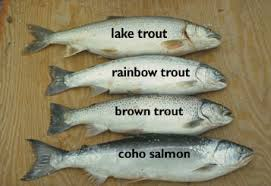 Tonys Fish Id Identifying Trouts And Salmons