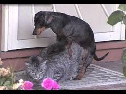 dog and cat love each other. Unique Other HD Wonderful Cats And Dogs Loving Each Other  Funny Cats P17 And Dog Cat Love Each Other