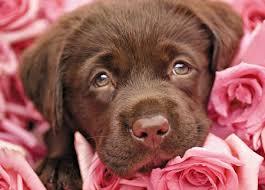 cute animal valentines day wallpaper. Interesting Valentines Happy Valentineu0027s Day  Rose Chocolate Valentine Animal Sweet Cute On Cute Animal Valentines Day Wallpaper U