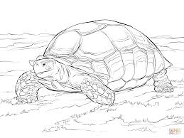 Small Picture Sulcata Tortoise coloring page Free Printable Coloring Pages