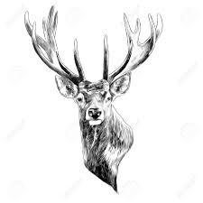 Stag Deer Head Sketch Graphic Design