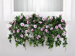 outdoor artificial morning glory recipes for containers