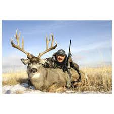 Best Deer Cartridge - Hunting, Whitetail Hunting Tips and How-To ...