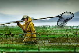 Image result for scottish farmer and fisheries