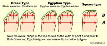 Ancestry Toe Chart 33 Problem Solving Foot Ancestry Chart
