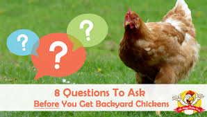 8 Questions To Ask Yourself Before You Get Backyard ChickensBackyard Chicken Blog