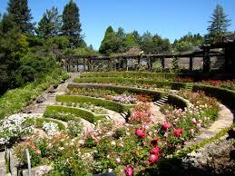 a gorgeous terraced garden red rose