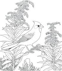 Cardinals Coloring Pages Cardinals Baseball Coloring Pages Related