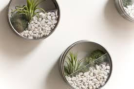 Wall magnetic miniature terrariums.