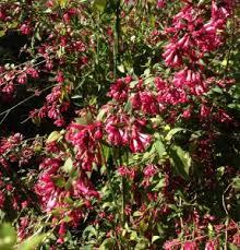 Ten Vivid Pink Garden Plants  Journal  Garden Design Montreal Shrub With Pink Flowers
