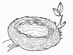 Small Picture In The Nest Coloring Page Free Printable Pages Pictures Of Birds