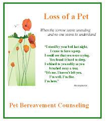 Loss Of A Pet Quotes Custom Pet Bereavement