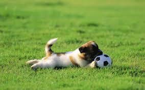 Puppy Dogs Junior Voetbal Behang 1440x900 Behang Honden 7