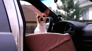 for dogs front seat net pet barrier chewycomrhchewycom animal planet water resistant bench style car