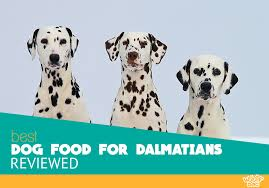 10 Best Dog Food For Dalmatians For 2019 Optimal Diet And