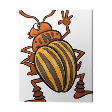 Obraz na plátně Bramborový brouk hmyz kreslené ilustrace • Pixers® • Žijeme  pro změnu
