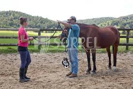 3200 Ian Benson /North River Horse & Humanship Centre mit Schülerin bei...  - Sorrel.de - Bilddatenbank