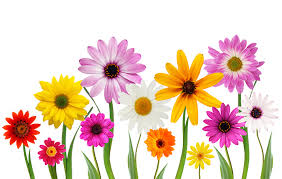 Free Shutterstock Images Free Stock Photo Spring Flowers The Shutterstock Blog