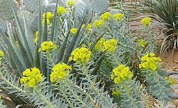 Small Picture Desert Gardening