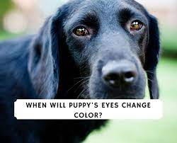 when do puppy s eyes change color