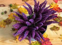 Traditionspflanze Heidekraut Pflanzensteckbrief Artfleur