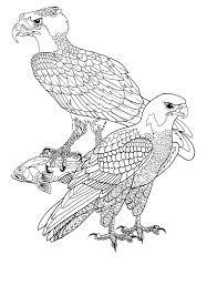 Roofvogels Kleurplaat Kleurplaat Bird Coloring Pages Coloring