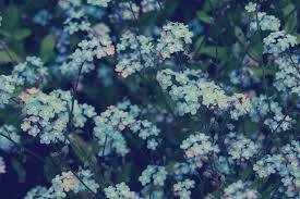 Blue Flower Aesthetic Desktop ...