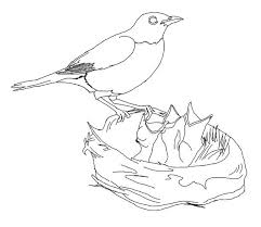 Small Picture Hungry Robin Babies Coloring Page Download Print Online