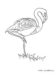 Small Picture Flamingo picture coloring pages Hellokidscom