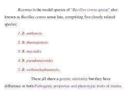 Bacillus Cereus Contamination In Food