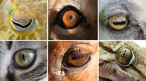eye shapes of the world hint at differences in our lifestyles