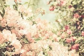 Resultado de imagem para flores tumblr