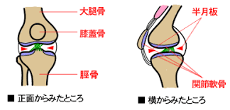 「膝の構造」の画像検索結果