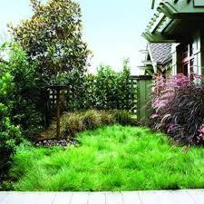 Triyaecom U003d Maintenance Free Backyard Landscaping  Various Lawn Free Backyard