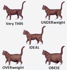 Cat Body Shape Chart Cat Body Shape Guide Ideal Size Weight And Body Shape For